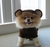21 Dogs Dressed as Other Animals for Halloween