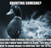 Afterlife Advice Mallard
