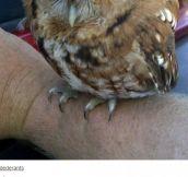 Grumpy Owl?