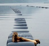Most interesting seal in the world
