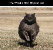 One very majestic cat
