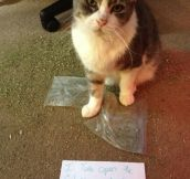 Pet shaming: Drug Edition