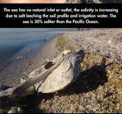 The creepy story of the Salton Sea