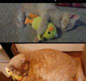 The cutest friendship