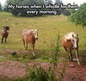 The loyalty of horses