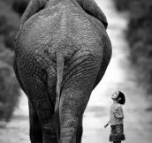 Young girl and elephant