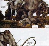 Prehistoric Life…