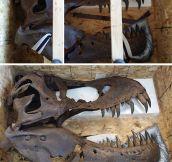 T-Rex skull…