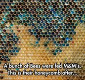 M&M honey sounds like a great product…
