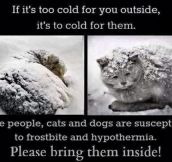 Something to remember with the cold weather…