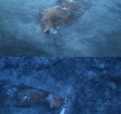 Frozen fox is sad…