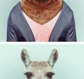 Animals who wear it better…