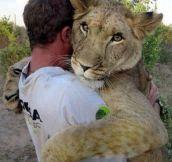 Animal hug…