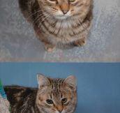 Quasi is a special cat…