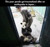 Traumatized panda…