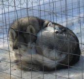 Warm snuggles…