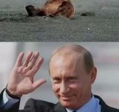 Putin salute the worthy…