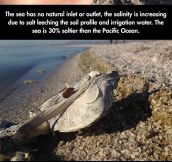 The creepy story of the Salton Sea…
