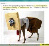 Spongedog…