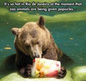 Zoo popsicles…