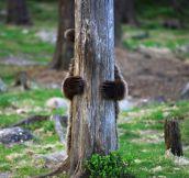 Bear hug…