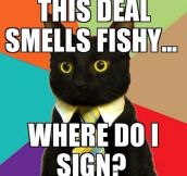 Business cat problems…