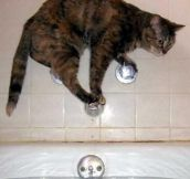This is how cats take a bath…