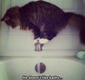 Acrobat cat…