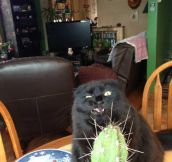Cactuses and cats don't mix…