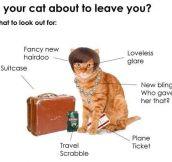 Oh dear, my cat is leaving me…