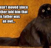 Owl cat…