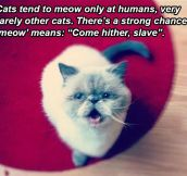 Cat theory…