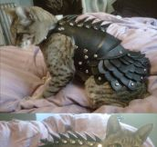 Cat leather armor…