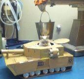 Cat tank…