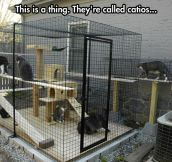Cat cage in the back yard…