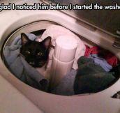 Kitty lives a dangerous life…