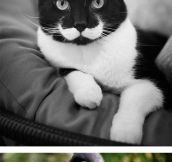 Classy animals with mustaches…