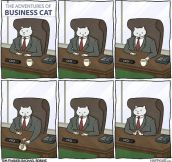Business cat…