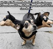How to stop dog bullying…
