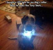 Iron dog…