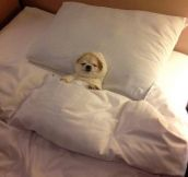 Sleep well…