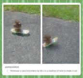 Skater bird…