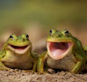 Two Happy Frogs…