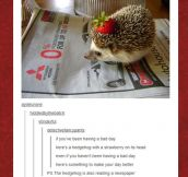 The hedgehog wants to go fast…