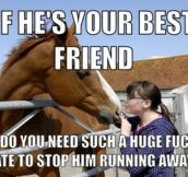 Your horse friend…