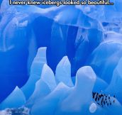 Beautiful icebergs…