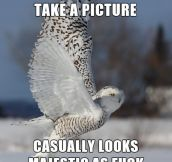 A ridiculously photogenic owl…