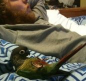 Watching Netflix with my bird…