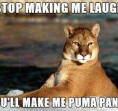 Sarcastic puma…
