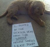 The worst puppy ever…